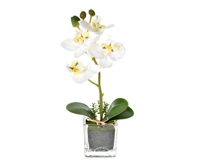 Planta Permanente Arranjo Orquídea - 5X23cm | Westwing.com.br