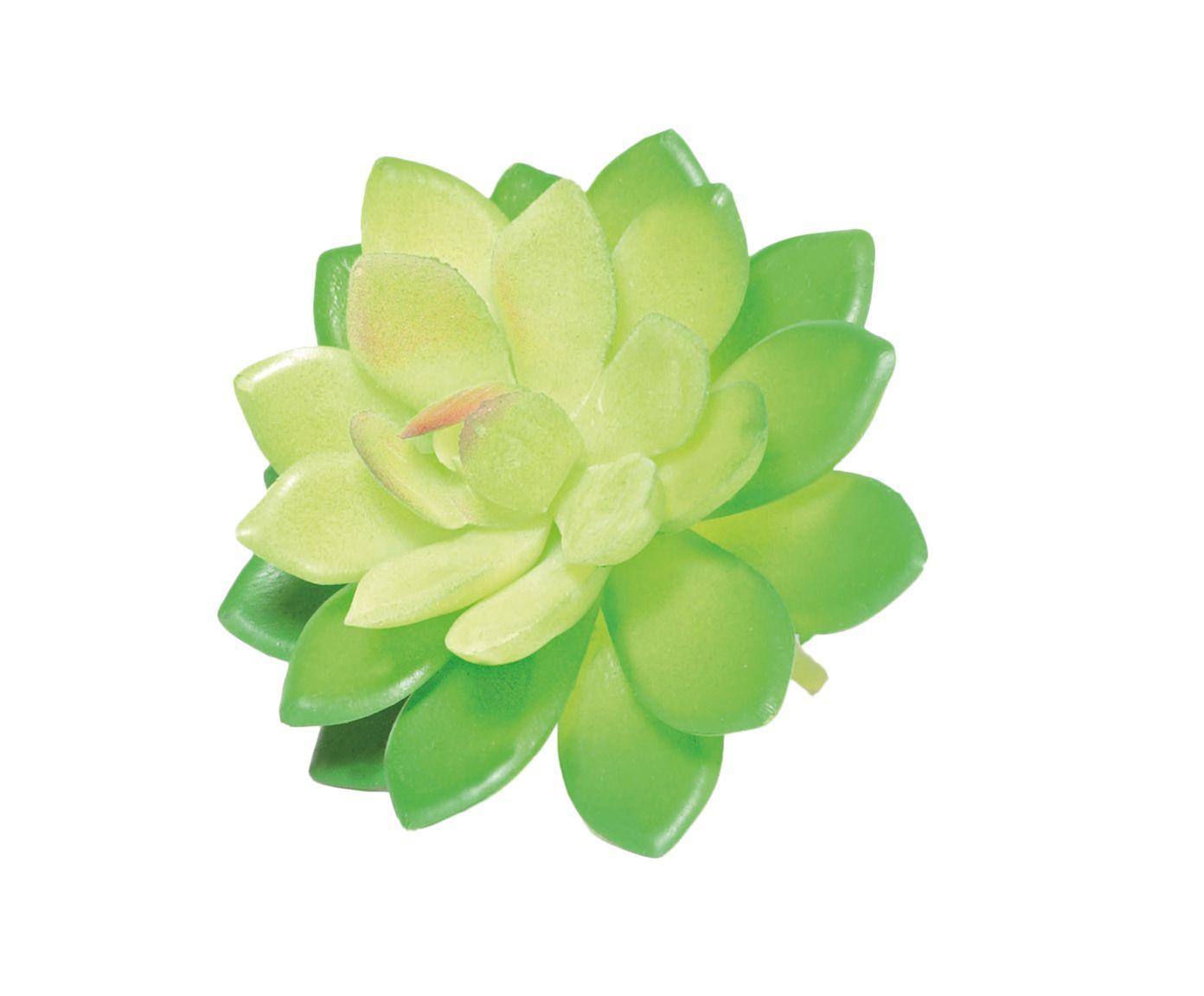 Planta Permanente Suculenta Cuynt - 10X8cm | Westwing.com.br