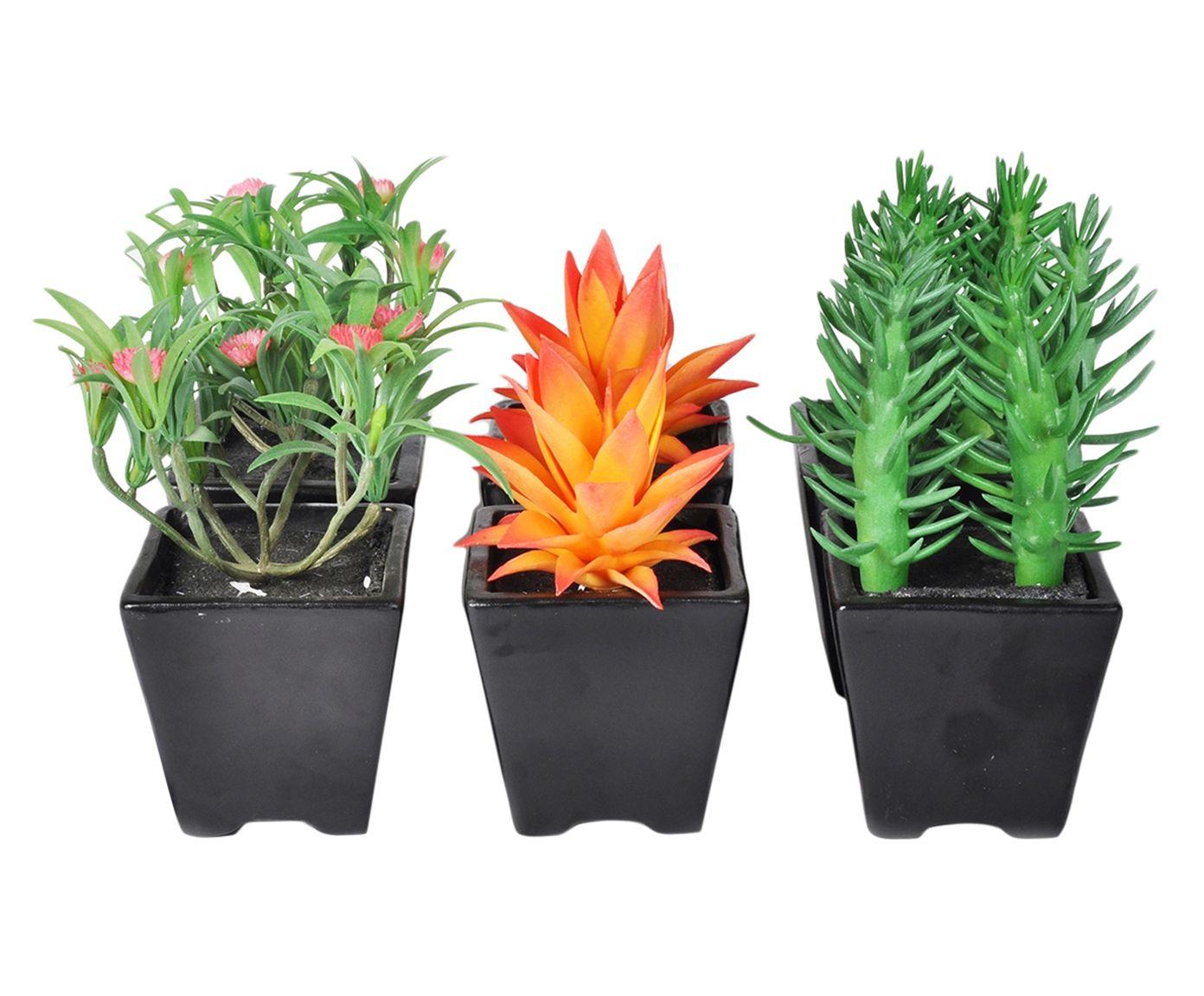 Jogo de Plantas Permanentes Clive - 9X9X9cm | Westwing.com.br